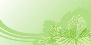 Fundo com folhas Imagem de Stock
