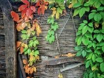 Fundo com folhas coloridas e a cerca de madeira Imagens de Stock