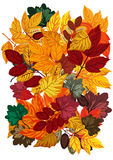 Fundo com folhas de outono ilustração do vetor