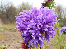 Fundo com folhas de outono e quadro para a foto fotos de stock