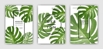 Fundo com folhas de palmeira tropicais Plantas tropicais exóticas Fotografia de Stock