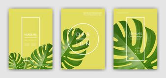 Fundo com folhas de palmeira tropicais Plantas tropicais exóticas Foto de Stock Royalty Free