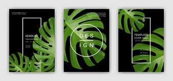 Fundo com folhas de palmeira tropicais Plantas tropicais exóticas Imagem de Stock Royalty Free