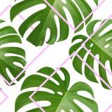 Fundo com folhas de palmeira tropicais Plantas tropicais exóticas Fotografia de Stock Royalty Free