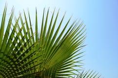 Fundo com folhas de palmeira verdes e o céu azul Foto de Stock Royalty Free