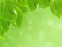 Fundo com folhas verdes Imagem de Stock Royalty Free