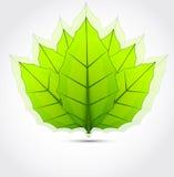 Fundo com folhas verdes Fotos de Stock