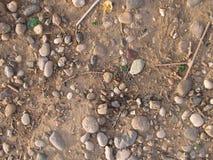 Fundo com formigas imagens de stock