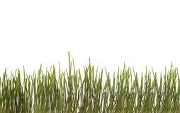 Fundo com grama verde. Fotos de Stock