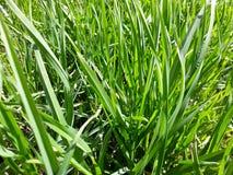 Fundo com grama verde fresca Imagens de Stock