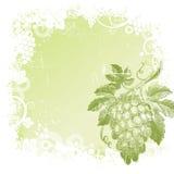 Fundo com grupo de uvas desenhado mão ilustração stock