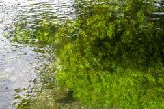 Fundo com ?gua verde clara do fluxo do rio de Sorgue em Provence, Fran?a fotografia de stock