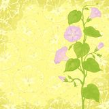 Fundo com Ipomoea das flores Fotos de Stock Royalty Free