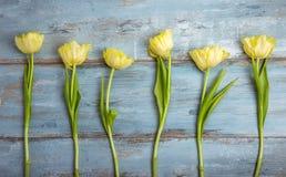 Fundo com luz - tulipas amarelas na mesa de madeira azul Páscoa, ` s da mãe, Valentim, dia do ` s das mulheres Vista superior com Imagens de Stock Royalty Free