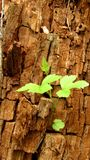 Fundo com máscaras marrons e cinzentas do tronco velho das árvores e das plantas imagens de stock royalty free