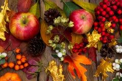 Fundo com maçãs, Rowan da ação de graças, cones, bordo dourado Fotos de Stock Royalty Free