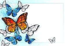 Fundo com monarca e morpho Fotos de Stock