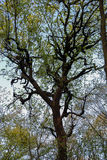 Fundo com muitos ramos do céu azul da árvore foto de stock royalty free