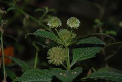 Fundo com natureza do estilo da flor Imagens de Stock