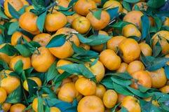 Fundo com o fruto das laranjas doces crescido na parte 6 dos trópicos foto de stock