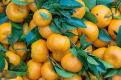 Fundo com o fruto das laranjas doces crescido na parte 9 dos trópicos imagens de stock royalty free