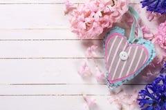 Fundo com os hyacnths frescos e a decoração azuis e cor-de-rosa das flores imagens de stock