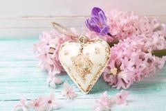Fundo com os jacintos, o açafrão e o decorativo das flores frescas Foto de Stock Royalty Free
