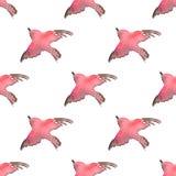Fundo com os pássaros simples 1 da aquarela Teste padrão sem emenda Fotografia de Stock