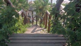 Fundo com palmeiras e a escadaria de madeira vídeos de arquivo