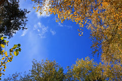 Fundo com partes superiores de árvores do outono fotografia de stock royalty free