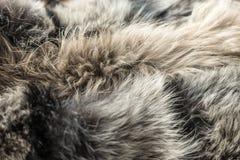 Fundo com pele animal Imagens de Stock Royalty Free