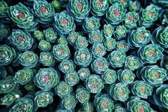 Fundo com planta suculento fotografia de stock