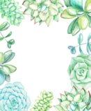 Fundo com plantas carnudas e plantas ilustração royalty free