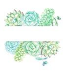 Fundo com plantas carnudas e plantas ilustração stock