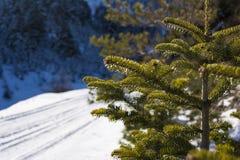 Fundo com ramos de árvore cobertos de neve do abeto na montanha em um dia de inverno, Peloponnese sul de Ziria, Grécia fotografia de stock