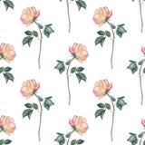 Fundo com rosas 1 Fotografia de Stock Royalty Free