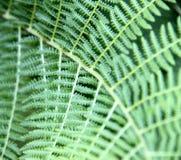 Fundo com samambaia verde Imagem de Stock