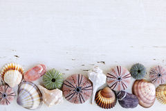 Fundo com seashells fotografia de stock royalty free