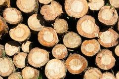 Fundo com teste padrão de logs da árvore Fotos de Stock Royalty Free
