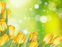 Fundo com tulipas Eps 10 Imagem de Stock