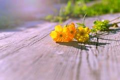 Fundo comemorativo com flores Flores amarelas nas placas Foto de Stock