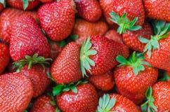 Fundo completo do quadro das morangos perfeitas maduras frescas Fotografia de Stock