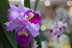 Fundo cor-de-rosa bonito da orquídea? criado no picosegundo Fotos de Stock