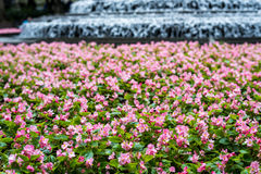 Fundo cor-de-rosa bonito do jardim e do volume de água Fotos de Stock Royalty Free