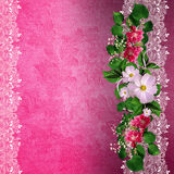 Fundo cor-de-rosa com beira floral Fotos de Stock Royalty Free