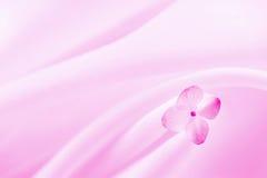 Fundo cor-de-rosa com flor Fotos de Stock Royalty Free