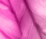 Fundo cor-de-rosa com folha Fotografia de Stock Royalty Free