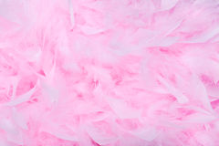 Fundo cor-de-rosa da boa de pena Fotografia de Stock