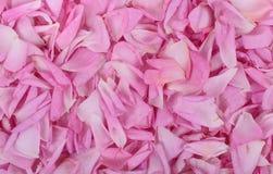 fundo cor-de-rosa das pétalas de Rosa fotos de stock royalty free