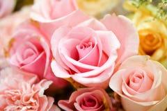 Fundo cor-de-rosa das rosas Fotos de Stock